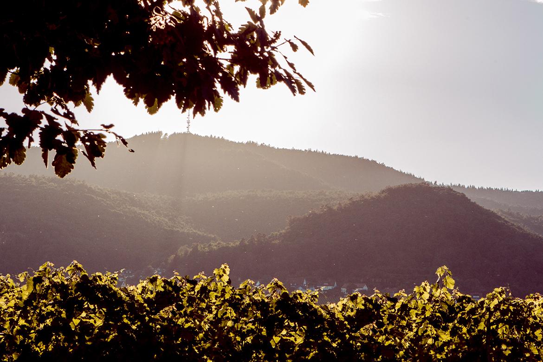 Weinbiet3