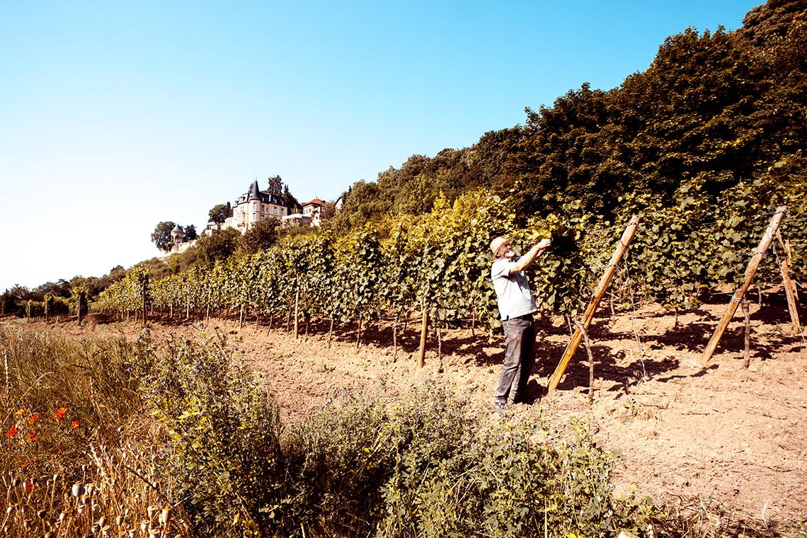 Im Weinkeller werden drei Millionen Liter Wein pro Jahr produziert – etwa Riesling vom Haardter Schlossberg